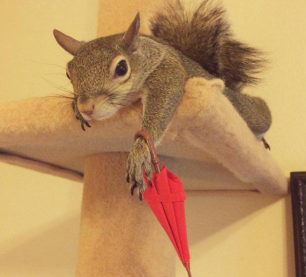 SquirrelJill8