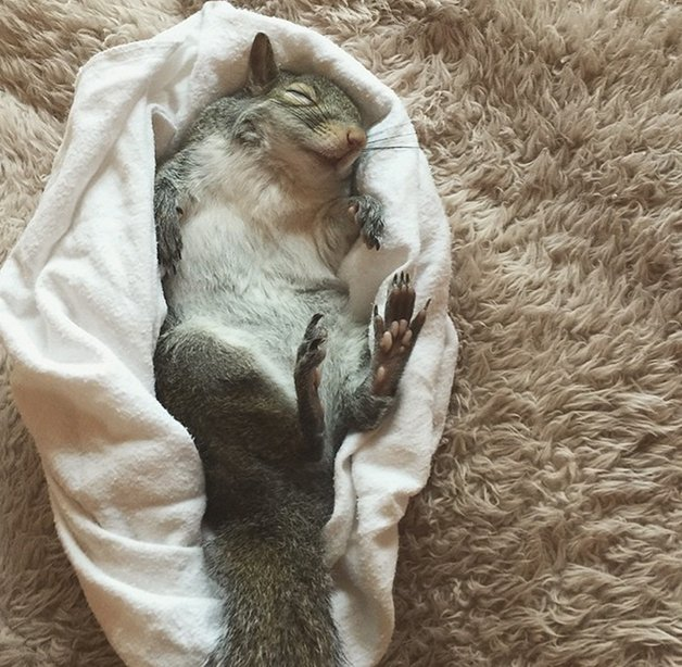 SquirrelJill9