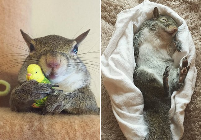 Esquilo-fêmea resgatada após furacão nos EUA faz sucesso no Instagram