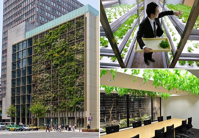 A empresa que transformou seu escritório em uma verdadeira fazenda urbana