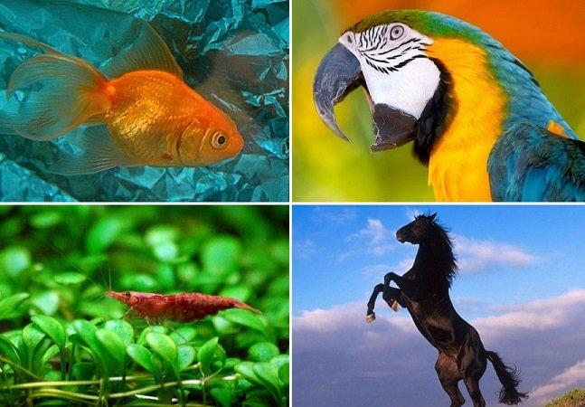 10 coisas que você não sabia sobre os animais