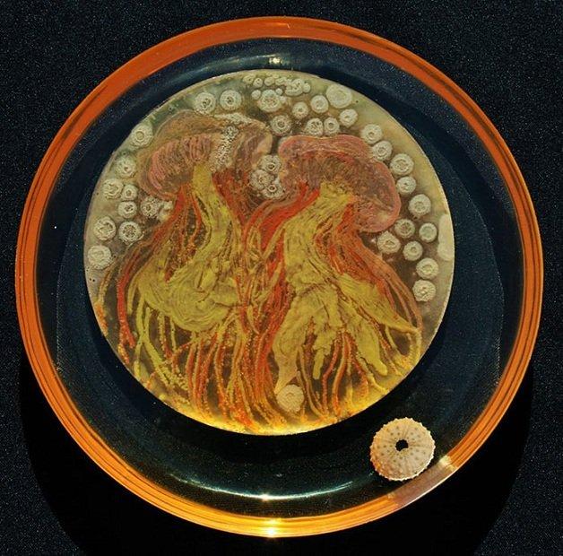 bacteria10