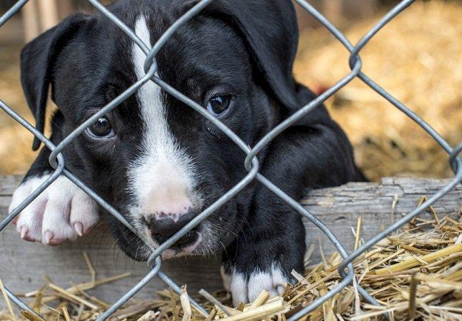 O que podemos aprender com a lei que uma cidade norte-americana lançou para proteger animais de abrigo