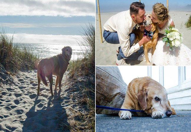 No dia de seu casamento, noiva leva seu cachorro em estado terminal para ver o mar pela primeira vez