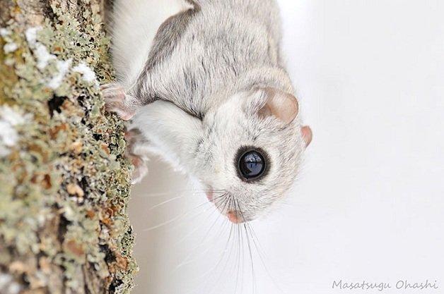 esquilo4
