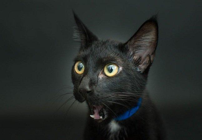 Fotógrafa capta gatinhos pretos porque eles são sempre os últimos a ser adotados