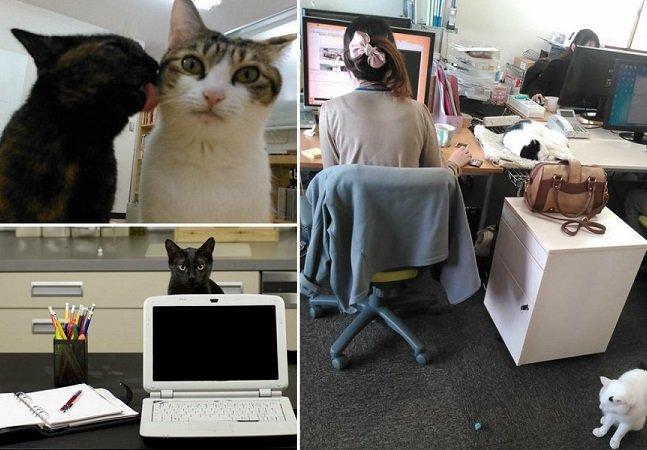 O que aconteceu na empresa que adotou 9 gatos para compartilhar o escritório com seus funcionários