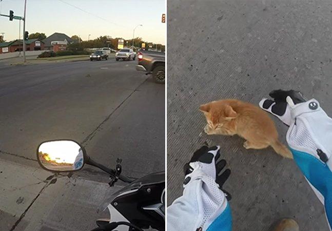 Vídeo mostra o momento em que motociclista para o trânsito pra salvar um gatinho