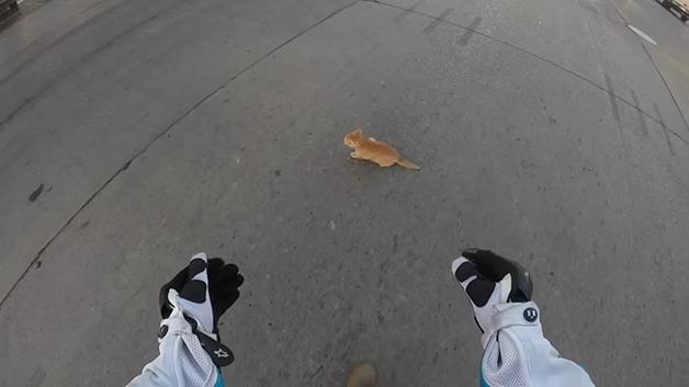 gato-rua6