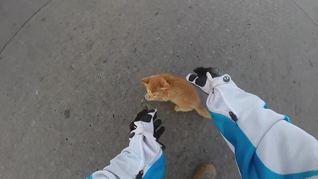 gato-rua7