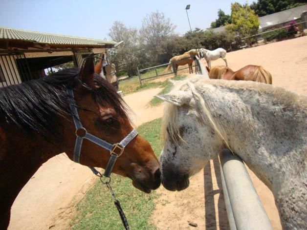 israel-cavalos2