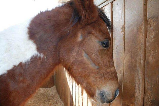 israel-cavalos3