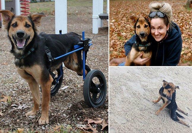 Como a tecnologia e a internet fizeram com que este cachorro paraplégico voltasse a andar