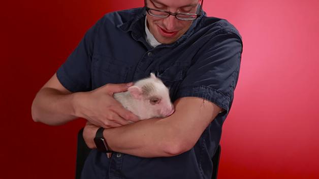 porquinho-bacon7