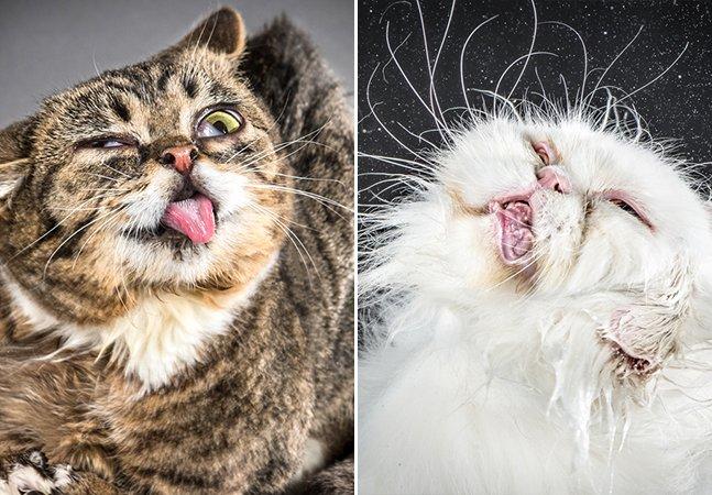 A incrível forma que essa fotógrafa encontrou para ajudar na adoção de gatos