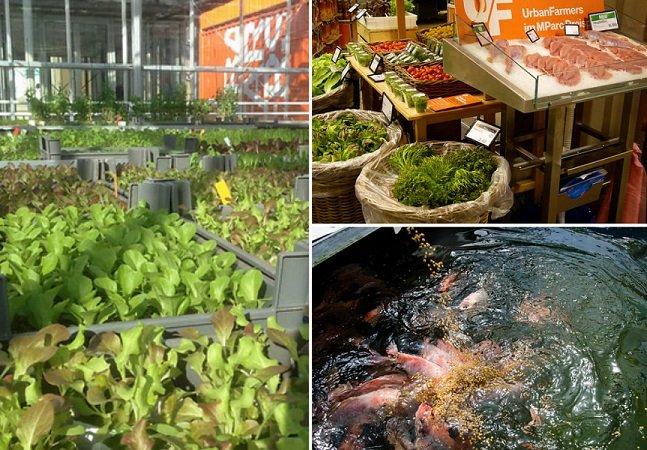 São Paulo terá fazendas orgânicas em cima de prédios em 2016