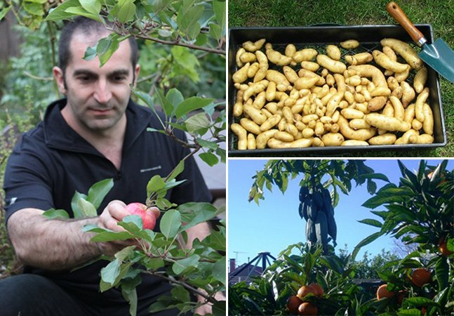 Como este homem transformou seu quintal de 60 m² em uma fazenda urbana
