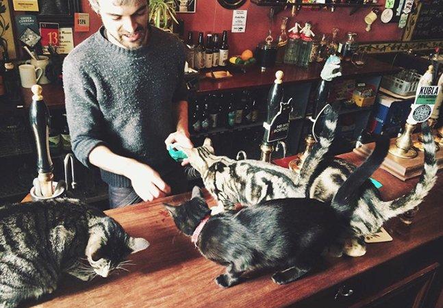 Este é o bar favorito dos amantes de gatos