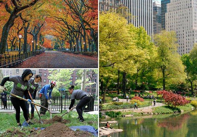 Nova York supera planos e conclui plantio de 1 milhão de árvores 2 anos antes do prazo final