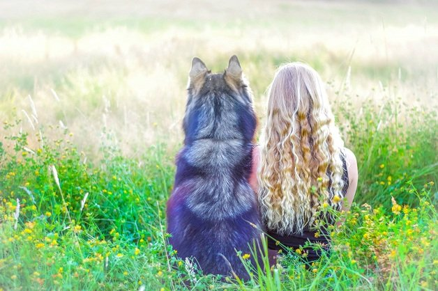 cachorro22