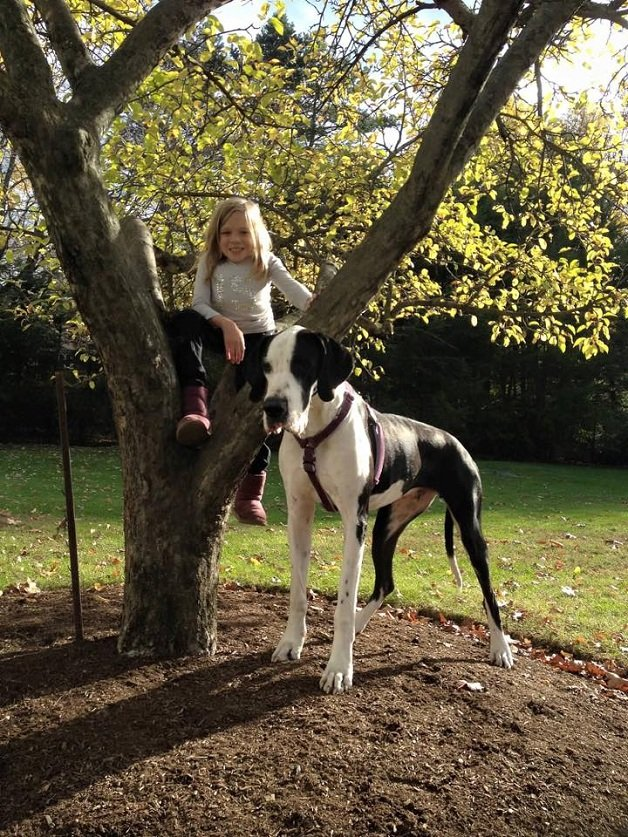 cachorro5