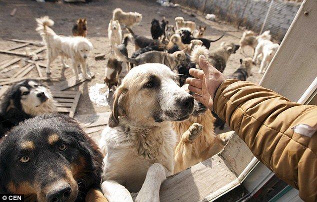 dogchines