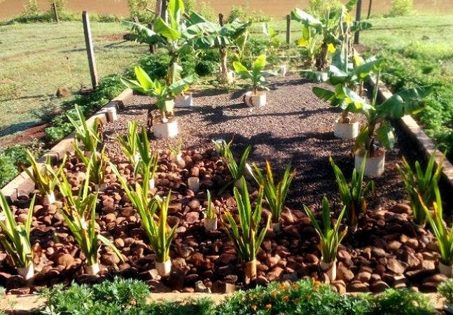Brasileiro cria sistema natural que transforma esgoto em água residual limpa
