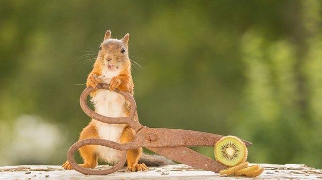 esquilos4