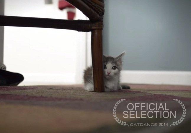 Vídeo adorável mostra a adoção  sob a perspectiva de um filhote de gato