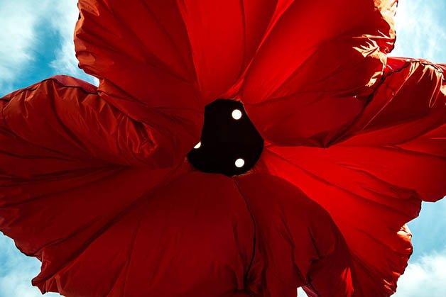 inflating-flowers-warde-hq-architects-jerusalem-8
