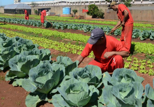 Presidiários em Minas Gerais produzem até 400 caixas de legumes por mês