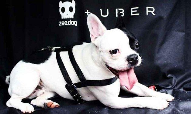 uber3