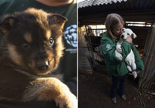 Estes cachorros foram salvos de fazendas coreanas antes de virarem comida em restaurantes