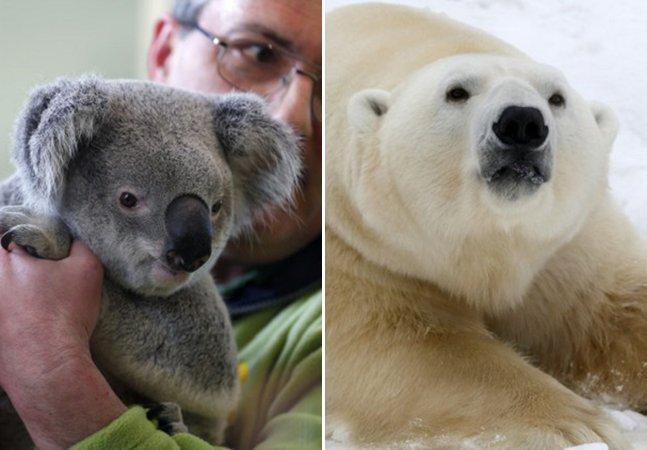 10 espécies animais que correm risco de extinção por conta das mudanças climáticas