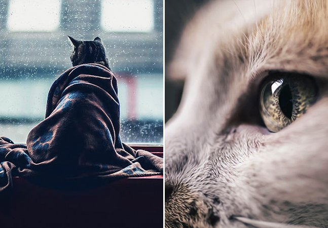 Fotógrafo combate a depressão clicando imagens incríveis dos queridinhos da internet: os gatos