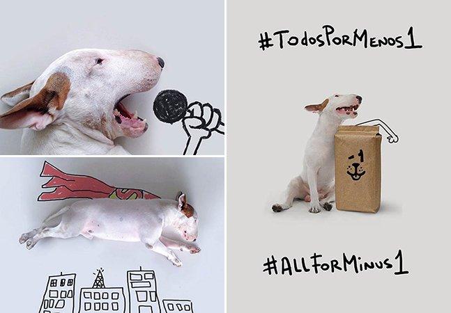 Campanha do cachorro brasileiro mais famoso do Instagram busca alimentar animais de abrigo