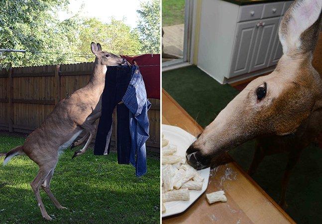 A incrível história de Lilly, um veado fêmea adotado por uma família humana