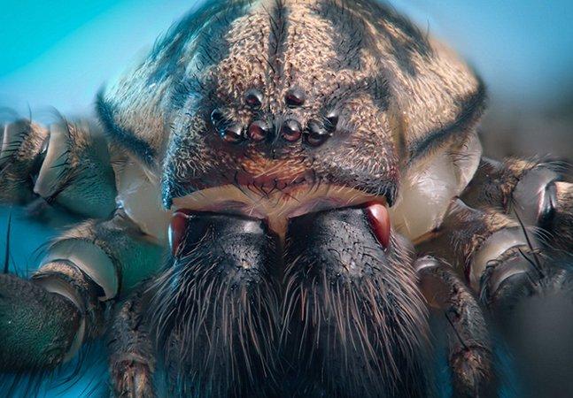Fotógrafo usa lente macro para captar os seres minúsculos que habitam na sua casa