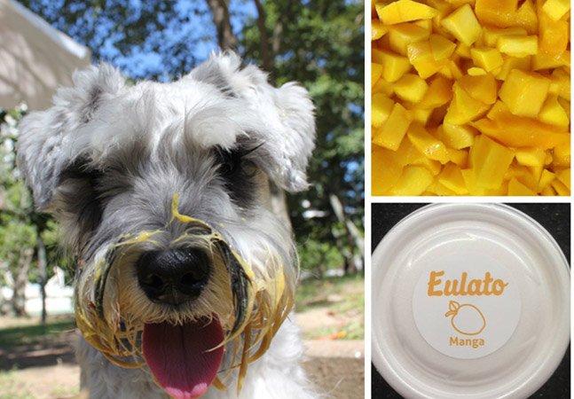 Cariocas lançam empresa de sorvetes 100% naturais para pets (e que você também pode tomar!)
