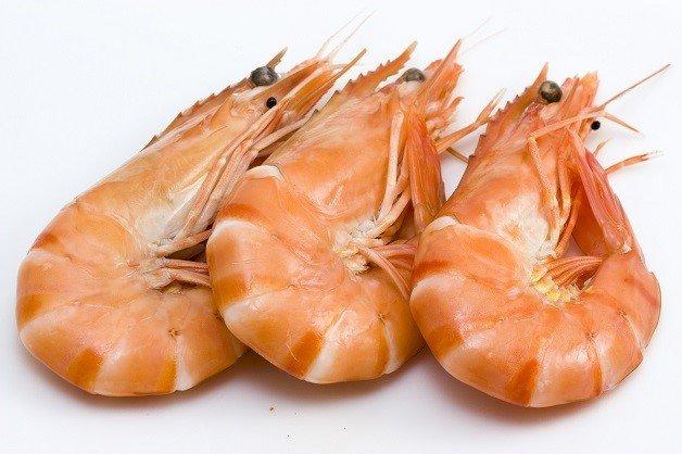 Background photo of three fresh isolated shrimps