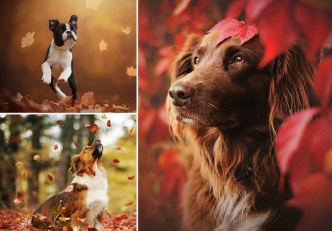 Fotógrafa une cachorros e natureza em série de fotos encantadora