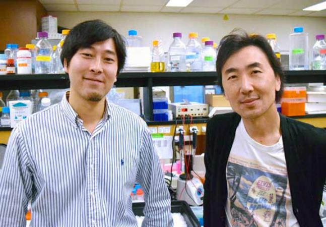 """Cientistas dão passo de gigante e conseguem """"desligar"""" proteína associada a diversos tipos de câncer"""