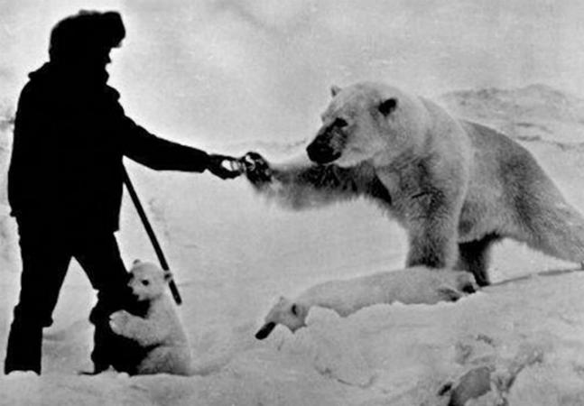 Conheça a história do homem que alimentava ursos polares