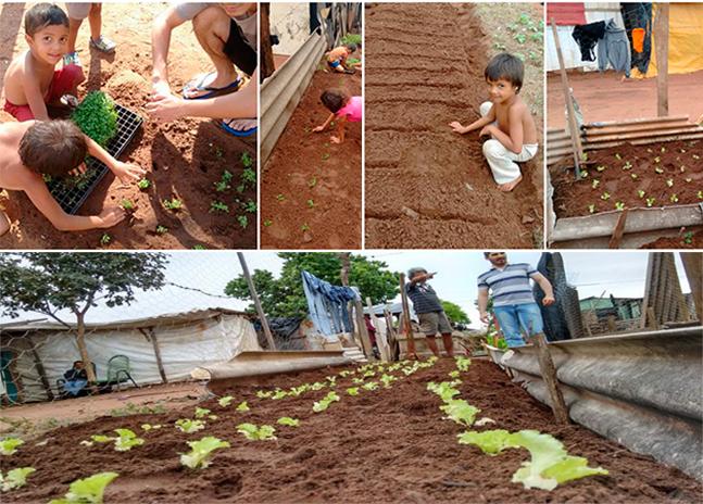 Favela em Campo Grande  cria horta comunitária para  garantir alimentos frescos