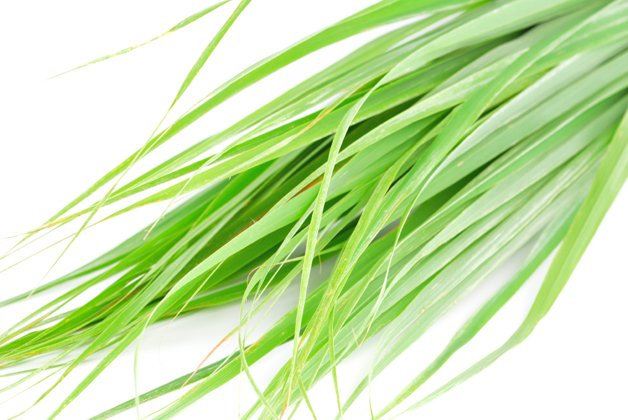 Lemon grass leaf