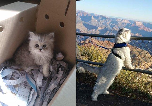 Gato resgatado faz sucesso ao servir de modelo fotográfico nas viagens de sua família