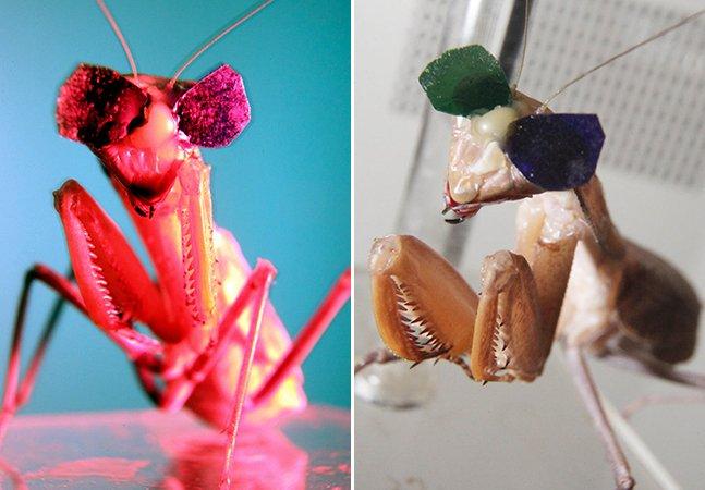 Cientistas estão colocando óculos 3D em insetos e não é por diversão