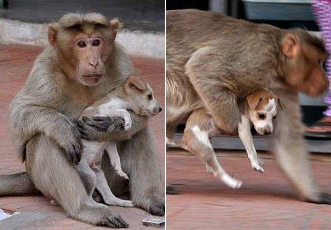 Macaco adota cachorro como se fosse um filho e mostra que podemos aprender muito com os animais