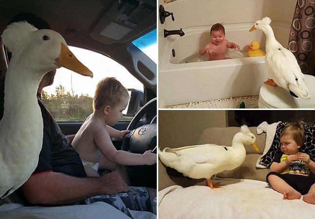 O pato que se tornou melhor amigo (e protetor!) deste pequeno garoto