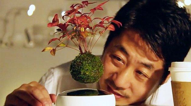 air-bonsai2